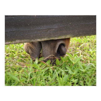 Horse nose grazing under fence 21.5 cm x 28 cm flyer