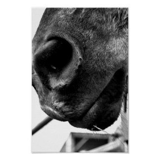 Horse nose poster