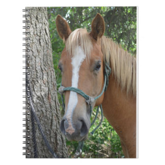 Horse Note Book