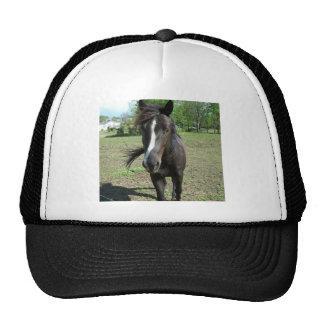 Horse Paint Mesh Hat
