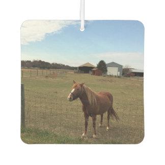 Horse Photo Car Air Freshener
