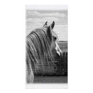 horse photo card template