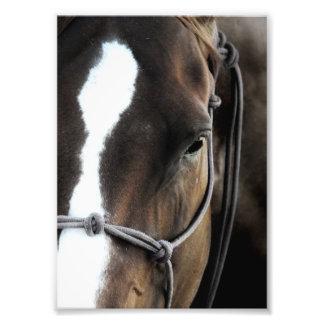 Horse Photo Art