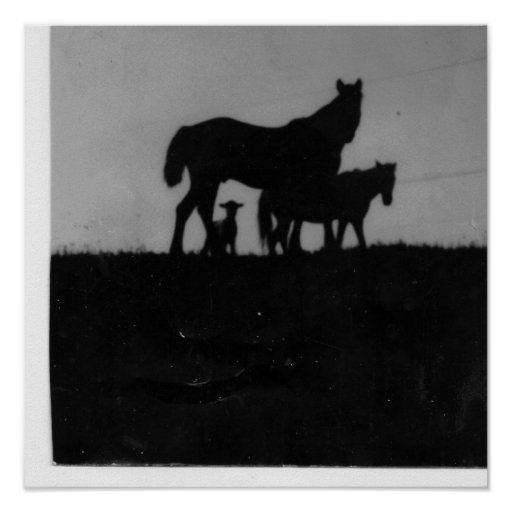 Horse/Pony/Lamb at Sundown Posters