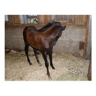 Horse/Pony Postcard