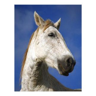 Horse portrait 21.5 cm x 28 cm flyer