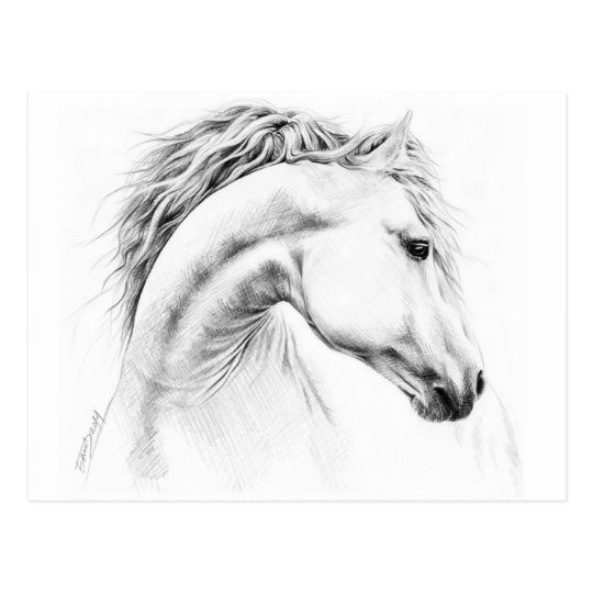 Horse portrait pencil drawing postcard