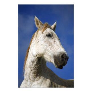 Horse portrait photo print