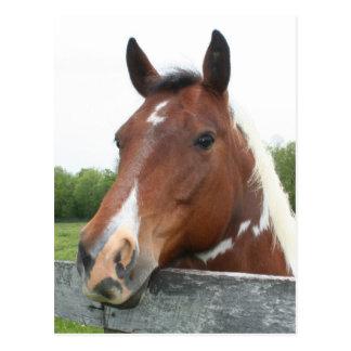 Horse Portrait Postcard