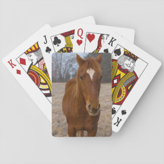 Horse pose playing cards