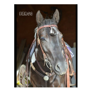 horse Post card of name pinto mare Fargo