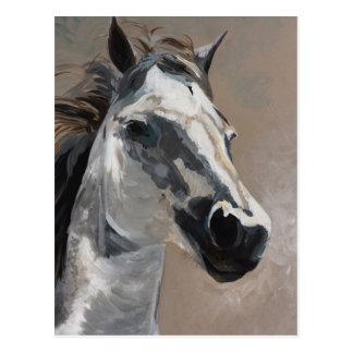 Horse Postcards