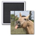 horse razzberry square magnet