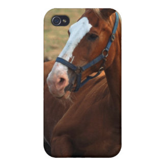 Horse resting on grass, close-up cover for iPhone 4