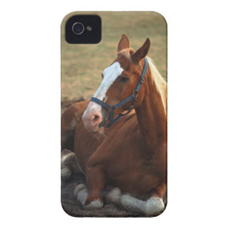 Horse resting on grass, close-up iPhone 4 case