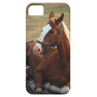 Horse resting on grass, close-up iPhone 5 covers