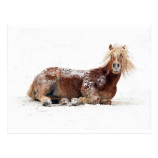 Horse Rolling In Snow Postcard