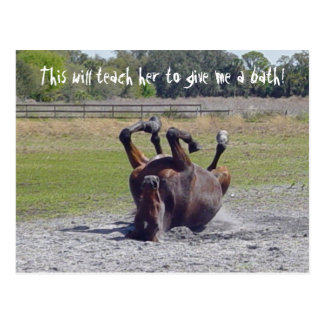 Horse Rolling Postcard