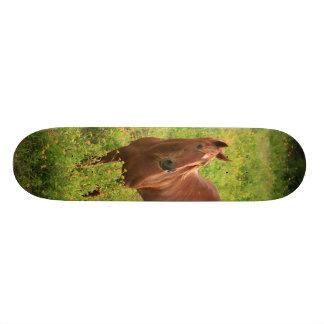 Horse 19.7 Cm Skateboard Deck