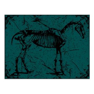 horse skeleton turquiose postcard