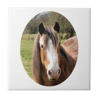 HORSE SMALL SQUARE TILE