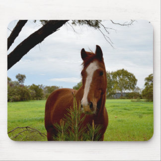 Horse_Sniffing_Young_Tree,_Mousepad Mouse Pad