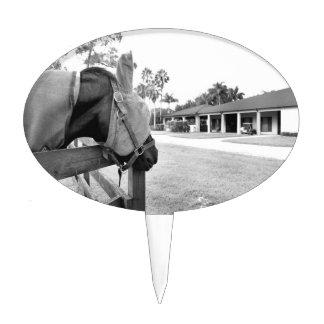 horse staring at barn bw cake picks