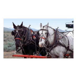Horse team business card