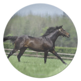 Horse Thoroughbreds, Wassl 1988, Plates