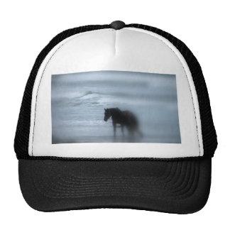 Horse walking the beach Newport Rhode Island Cap