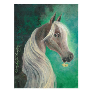 Horse With Daisy Post Cards, Greeting , Note Cards Postcard