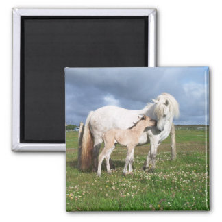 Horse With Her Baby Square Magnet