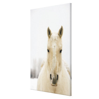 Horse with snow on head canvas print