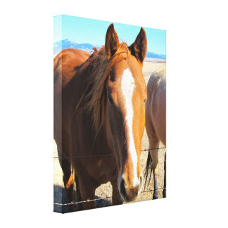 Horse Wrapped Canvas