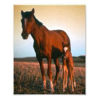 Horses, a Mare and Colt Photo Art