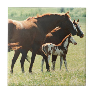 Horses and Foal Picture Ceramic Tile