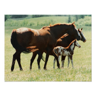 Horses and Foal Picture Poster
