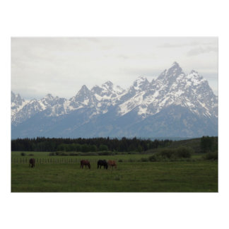 Horses And Tetons Poster
