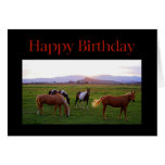 Horses at Sunset Happy Birthday Cards