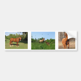 Horses - Beautiful Horses Bumper Sticker