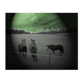 Horses black and white with green postcard
