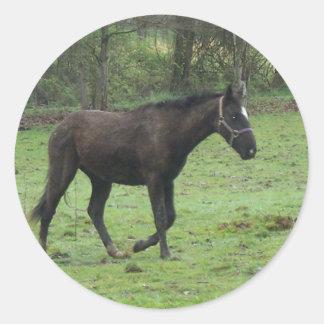 Horses! Classic Round Sticker