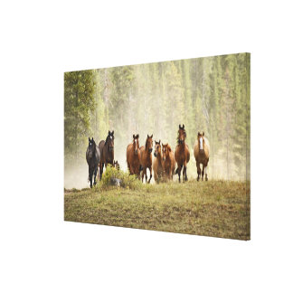 Horses cresting small hill during roundup, canvas print