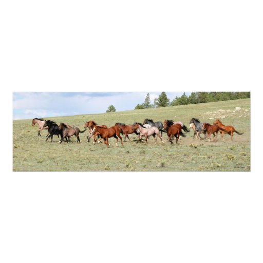 Horses Enjoying the Wide Open West Photo Art