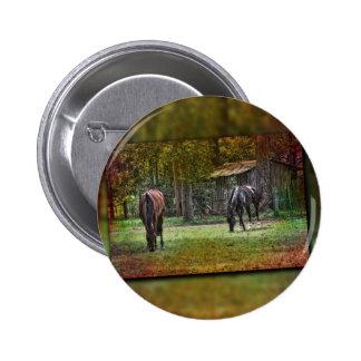 Horses grazing buttons