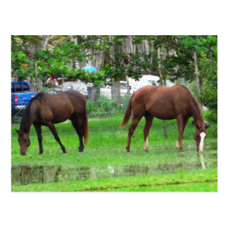 Horses Grazing in Icacos, South Trinidad Postcard