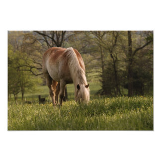 Horses grazing in meadow, Cades Cove, Great 3 Photograph