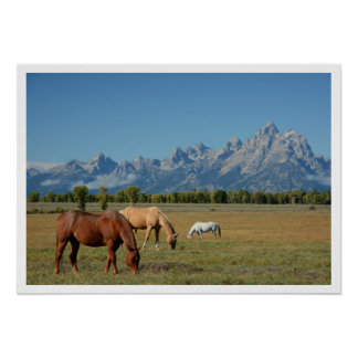 Horses Grazing in Pasture, Teton Mountains Poster