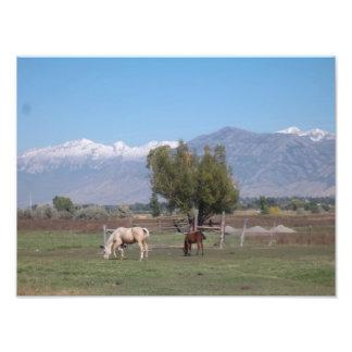 Horses Grazing Photo Print
