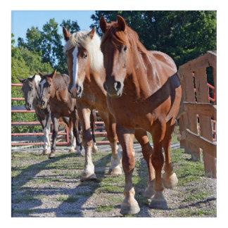 Horses Headed Back To The Barn Acrylic Wall Art